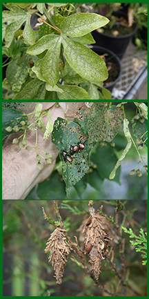 3 Garden Insect Problems