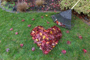 Fallen Leaves Raked into Heart Shape on Green Grass Lawn-1